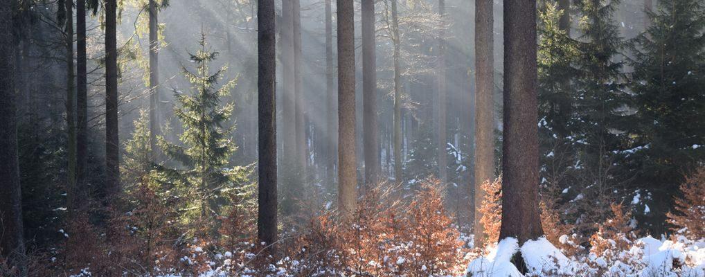Lernort Natur im Jagdverein Hubertus