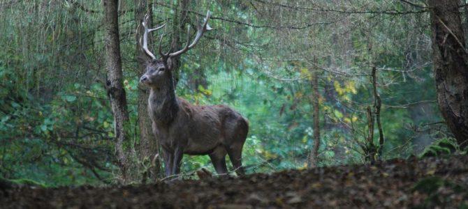 Ansprechpartner in Sachen Jagd im Vordertaunus